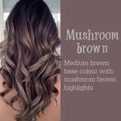 color ideas top 25 best brown hair colors ideas on pinterest chocolate brunette hair fall hair colour