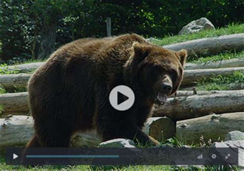Zoo De La Fleche Lodge 88 by Zoo De La Fleche Lodge Zoo De La Fl Che Dormir Au Milieu