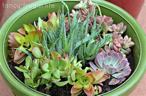 interesting succulents page 6