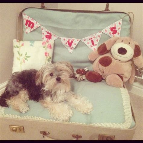 suitcase dog bed suitcase dog bed c a n i n e c a r e pinterest dog