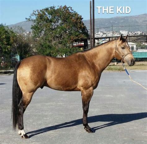 caballos cuarto de milla caballo milla rienda charra clasf