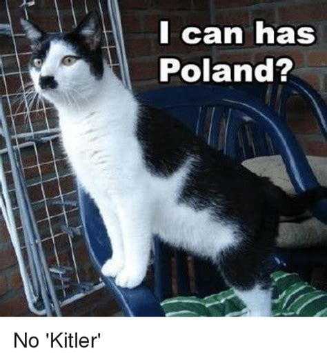 Cat In Suit Meme - 25 best memes about i can has poland i can has poland memes