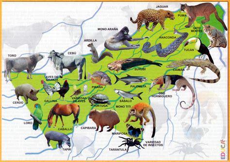 las cadenas migratorias definicion fauna de pando departamento de pando historia