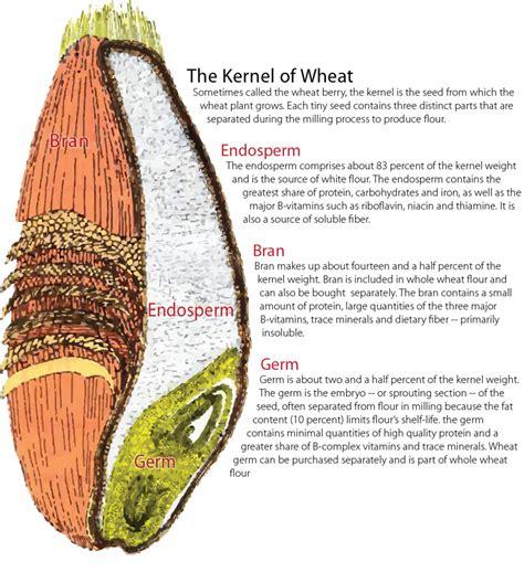 whole grain kernel parts image gallery wheat kernel