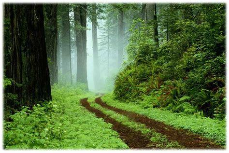 wallpaper alam hutan pemandangan alam hutan wallpaper pemandanganoce
