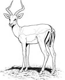 Free Gazelle Coloring Pages sketch template