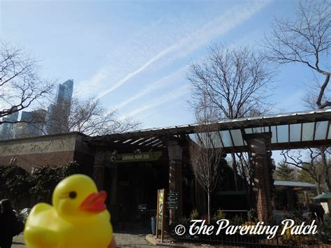 Patchwork On Central Park - the duck and the central park zoo the rubber ducky