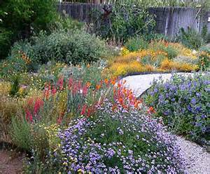 california native plants garden tips coloradoboulevard net