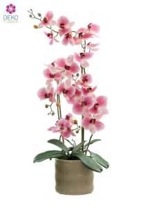 Orchideen Im Topf 2076 orchideen im topf orchideen im topf h30cm wei rosa