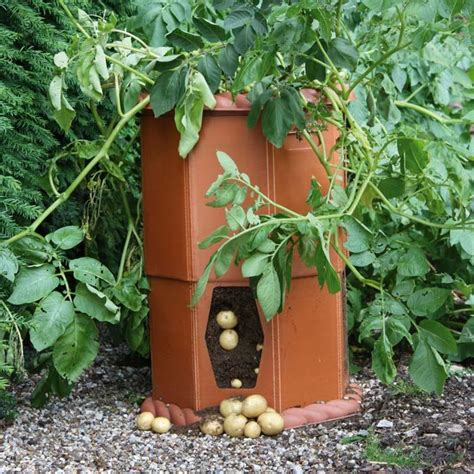 Patio Potato Planters by Growing Potatoes In A Barrel Patio Growing Potatoes