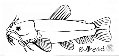 lake fish coloring pages how to draw bullhead fish