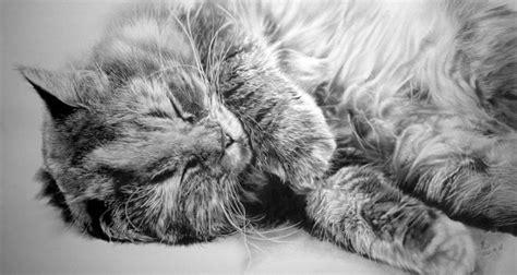 imagenes increibles de gatos los incre 237 bles dibujos hiperrealistas de gatos hechos a