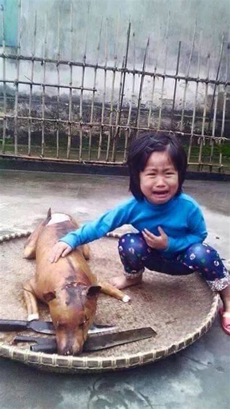 dog eating me out story heart wrenching photo heats up dog meat debate on social