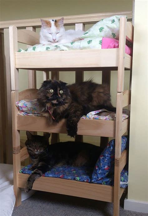 bed for cats cat owners in japan turn ikea doll beds into adorable cat beds