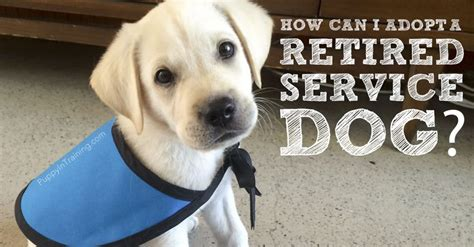 how do guide dogs get trained adopt a
