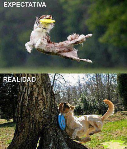 imagenes de memes animales memes chistosos de animales imagenes chistosas