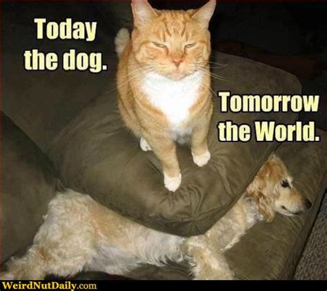 Cat Sitting Meme - funny pictures weirdnutdaily today the dog tomorrow