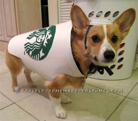 Best Easy Cheap Detox For Dogs by Starbucks Costume Easy And Inexpensive