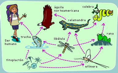 cadenas de redes y piramides alimenticias redes cadenas pir 225 mides alimenticias geografia y medio