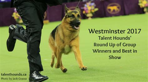 westminster show 2017 winner 2017 westminster show winners up by breed