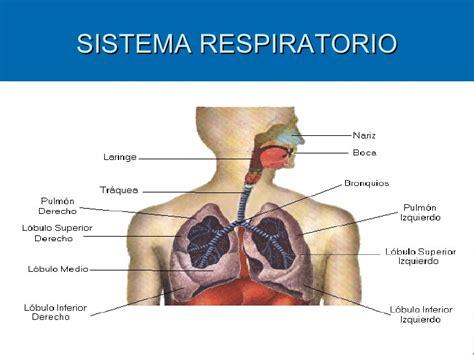 imagenes del sistema respiratorio ingles el sistema respiratorio informaci 211 n para docentes