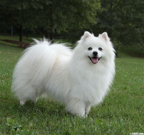 most cutest puppies top 10 most popular small and cutest dogs in the world 2014