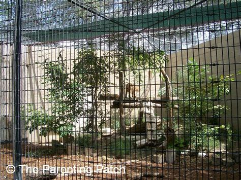 Garden City Zoo Ks Big Cats At The Richardson Zoo In Garden City Kansas
