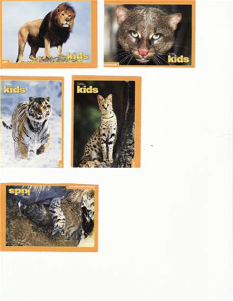 national geographic cards free 6 national geographic trading cards big cats