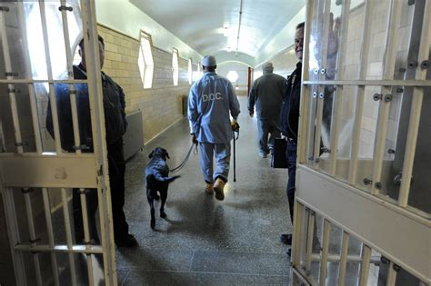 prison dogs vocational program integrates 3d printing to educate inmates at the illinois youth