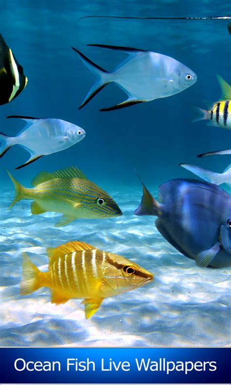 fish live wallpaper apk fish live wallpapers free apk android app android freeware