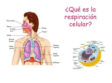 imagenes de respiracion yoga respiracion celular