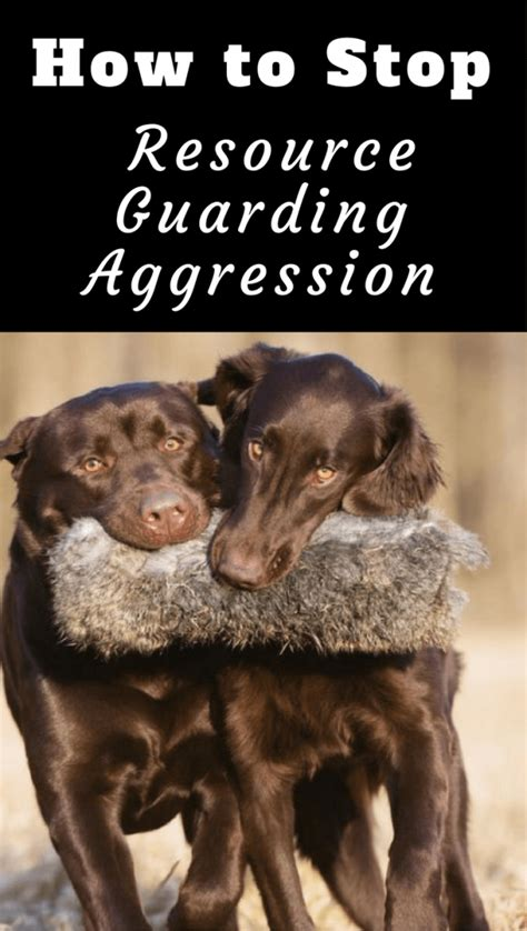 puppy resource guarding how to stop resource guarding aggression between dogs