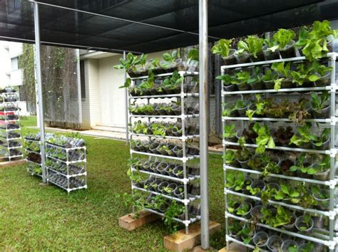 It?s EASY to Grow Your Own Organic Vegetables at Home