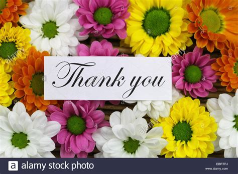 Thank You Flowers by Thank You Card With Colorful Santini Flowers Stock Photo