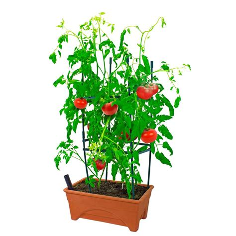 viagrow   plastic tomato raised garden bed kit