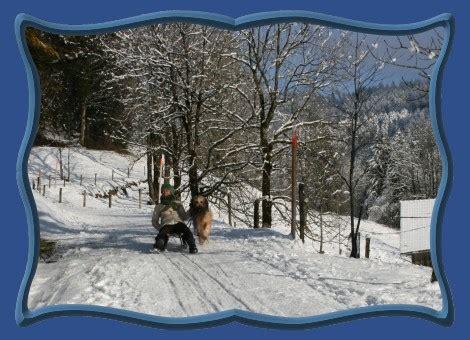 wann darf ich mit dem führerschein anfangen briard wintersport mit b welpen broba d or schweiz