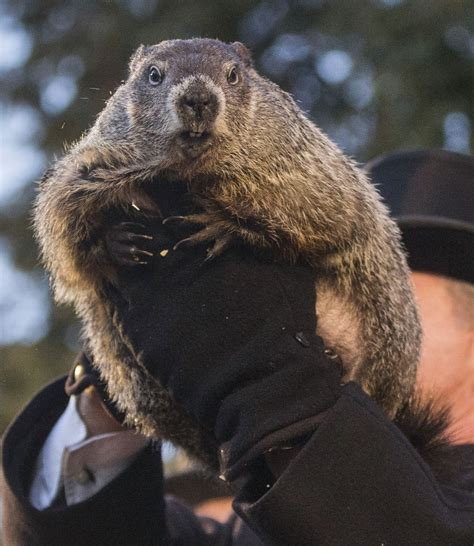 groundhog day in groundhog day is the dumbest american for the win
