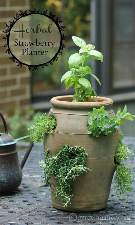 25 best ideas about strawberry pots on plant