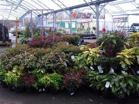 primrose cottage garden centre ガーデンセンター notcutts garden centre ヨーロッパ primrose