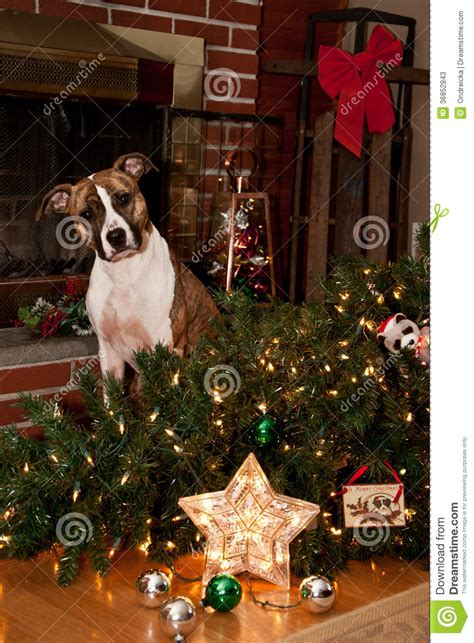 guilty dog stock image image of beauty merry american