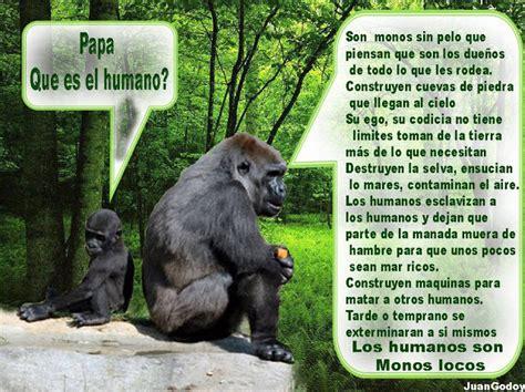 son los animales ms infieles a su pareja que nosotros taringa los humanos son monos locos adoptar como adoptar un