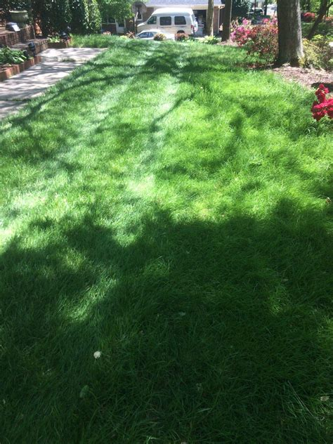top 28 how much does a new lawn cost how much does it