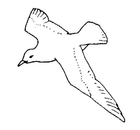 seagull coloring page coloringcrew com