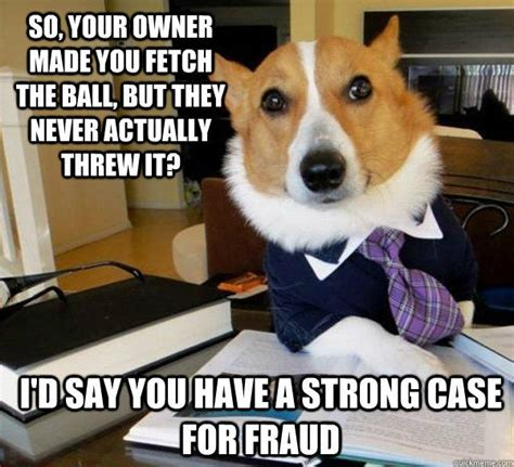 Dog Owner Meme - so your owner made you fetch the ball but they never