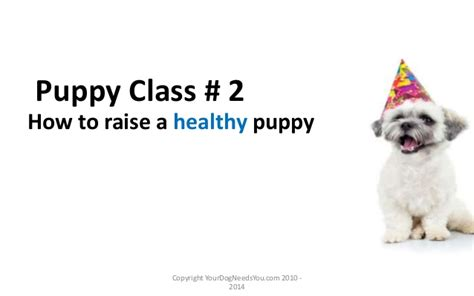 how to raise a puppy puppy class 2 how to raise a healthy puppy