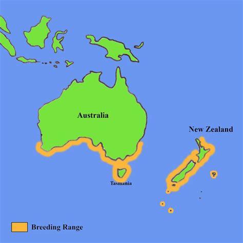 where do penguins live map blue penguins