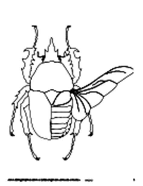 ask a biologist coloring page key biology coloring pages worksheets asu ask a biologist