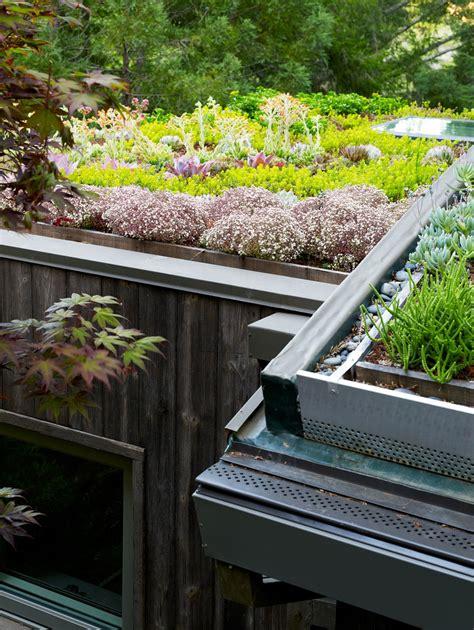 live roof edging artist studio overlooks guest cabin with rooftop garden