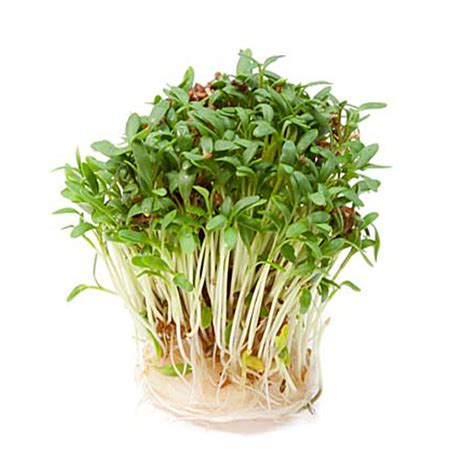 In 120 Gram 1 biologisch tuinkers 120 gram sonnentor oostenrijksewijnshop