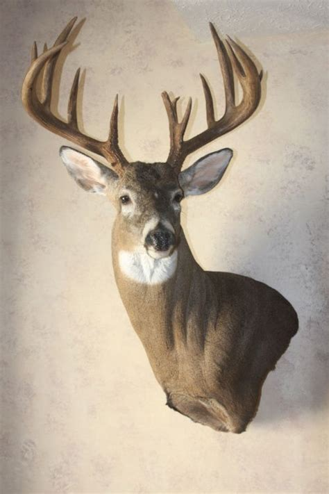 types of bucks buck s pro mount taxidermy